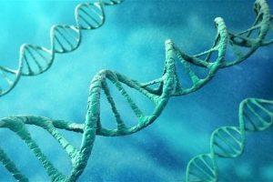 Biến đổi ADN để điều trị rối loạn máu ngay từ trong phôi